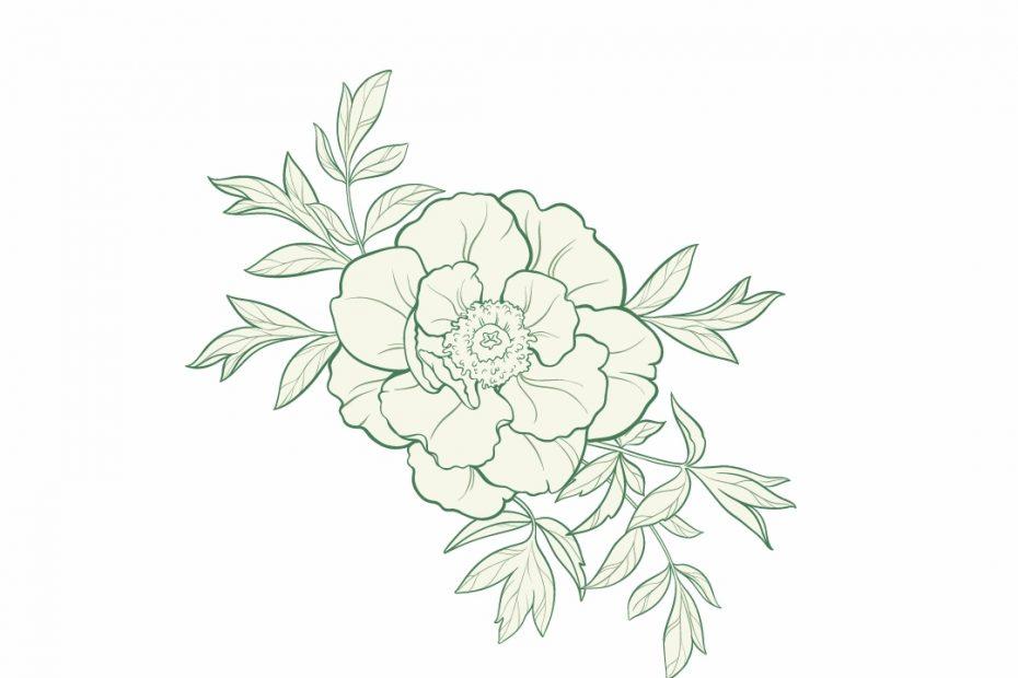LA ROSE DE DAMAS : Quels sont les bienfaits des roses de damas?