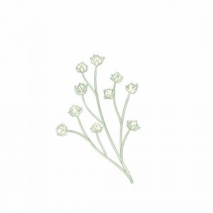 GRAINE DE LIN: Quels sont les bienfaits des graines de lin?